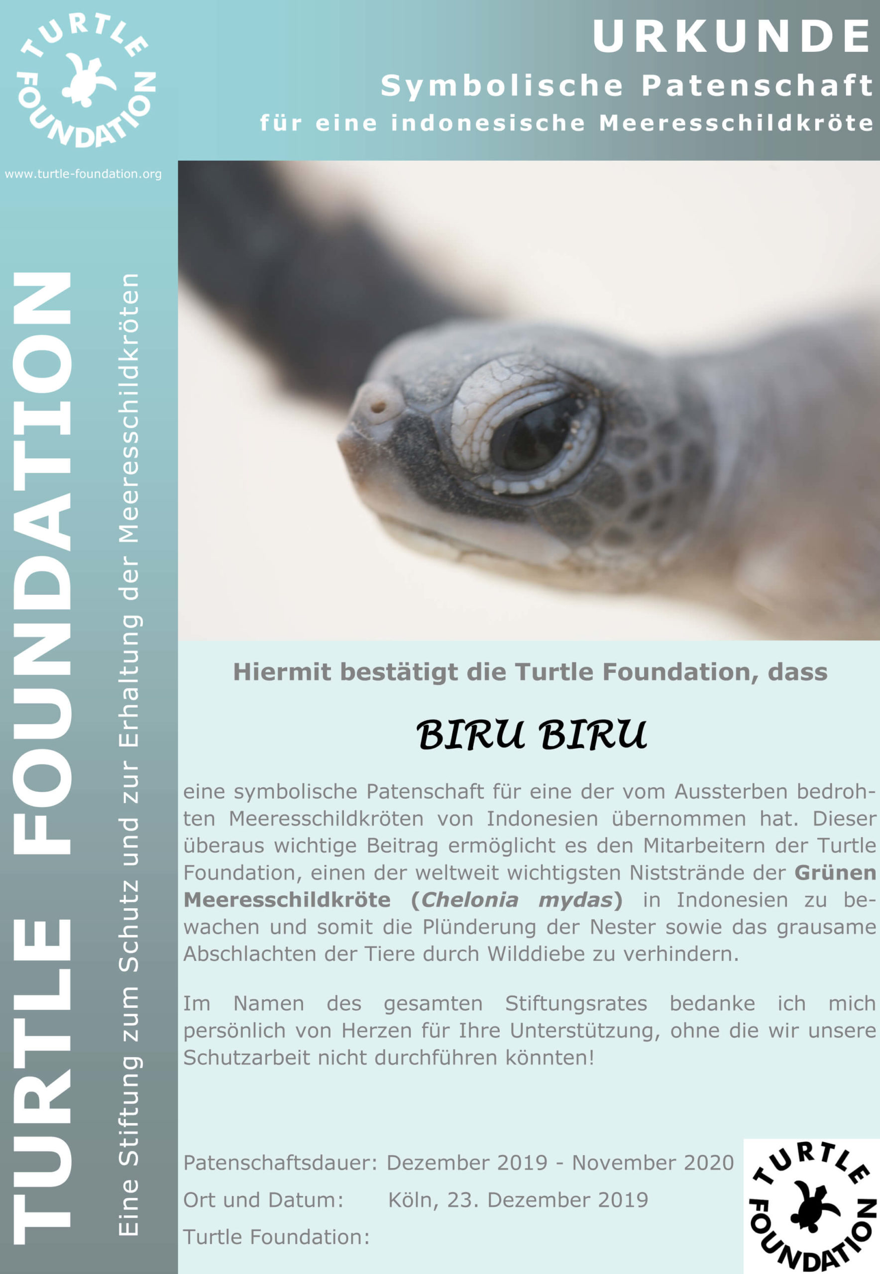 Turtle Foundation BIRU BIRU Patenschaft Schildkroete